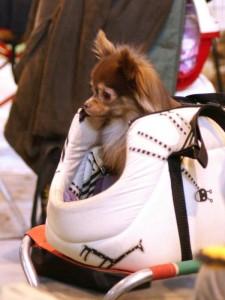 Hund in der Tasche