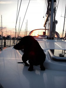 Dackel Bärbel im Sonnenuntergang an Deck der Segelyacht