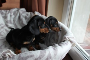 Olga und Ottilie in ihrem neuen Zuhause