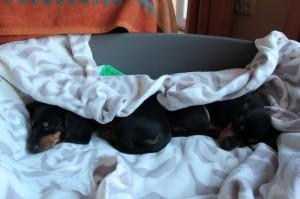 Der Umzug war sehr aufregend. Zeit zu schlafen ...